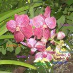 Hoa phong lan hường | Pink orchid flower