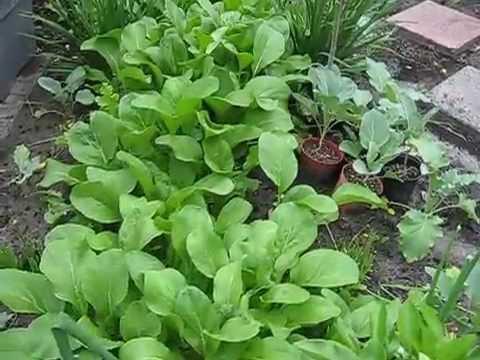 Mảnh vườn nhỏ có đủ đồ | Little backyard garden bed