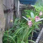 Phong lan trên cây nhản | Beautiful orchid flowers