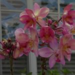 Colorful Orchid Flowers & Wind Sounds 00940